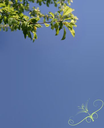 Plum green fruits on blue sky background Stock Photo - 5431774