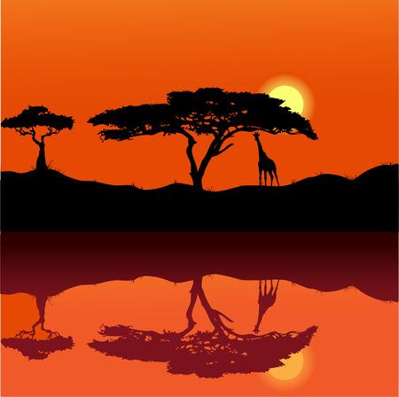 animales safari: puesta de sol de fondo de África 2
