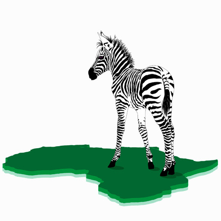 sripes: frican Baby zebra illustration Illustration