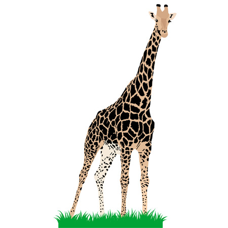 plains: African animals 3 : Vector giraffe Illustration