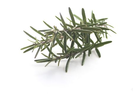 Rosemary isolated on white Stock Photo - 6242395