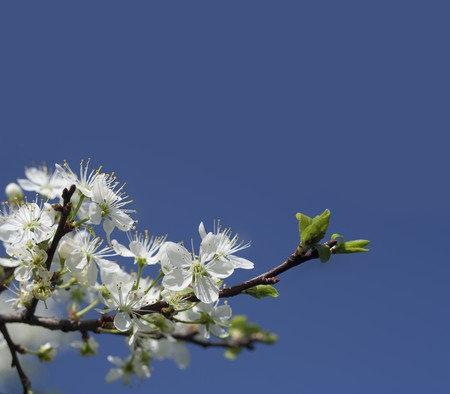 Blue background with Spring Flowers Stock Photo - 7073825