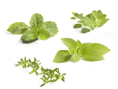 Collection of various herbs, isolated on white Stock Photo - 7845934