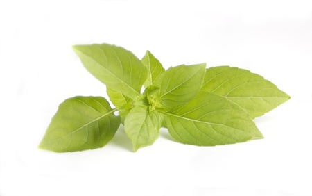 Basil isolated on white Stock Photo - 8262054