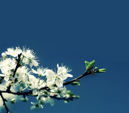 Blue background with Spring Flowers  Stock Photo - 9099037