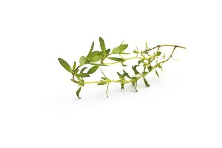 Savory isolated on white background Stock Photo - 9398839
