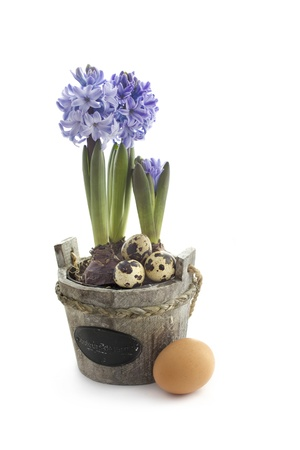 Easter concept : hyacinth flowers with quail and chicken eggs photo