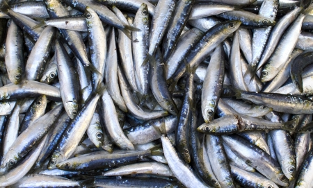 tiddler: Fresh Sardines