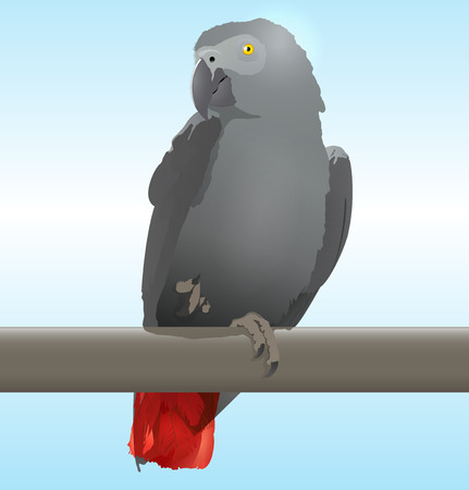 African Grey Parrot  Jaco  vector illustration illustration