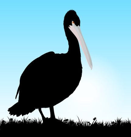 Vector black pelican  Grass  separated Stock Photo - 26861841