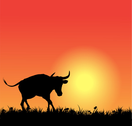 spanish bull: Vector bull silhouette on sunset
