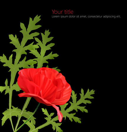 Vector Poppy flower card isolated on black background  photo