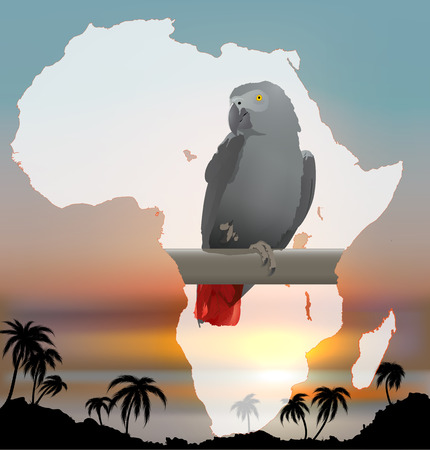 african grey: African map with background and Grey Parrot  Jaco  Stock Photo