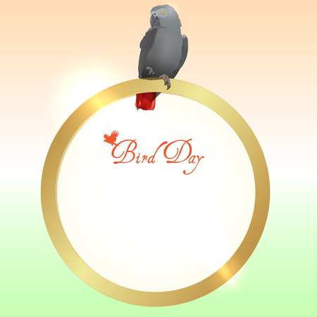 Bird Day.  African Grey Parrot  photo