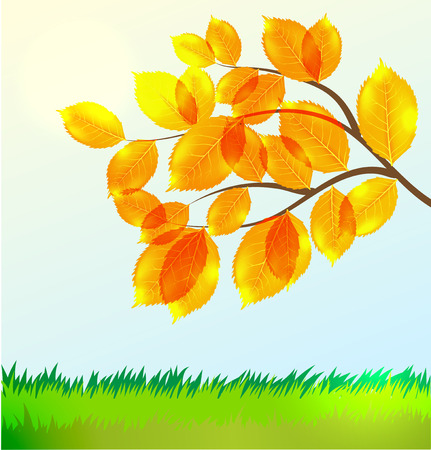 aronia: Vecor landscape with Autumn leaves