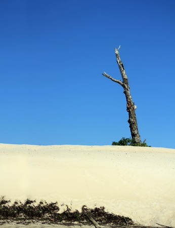 nt: Dead tree on blue sky