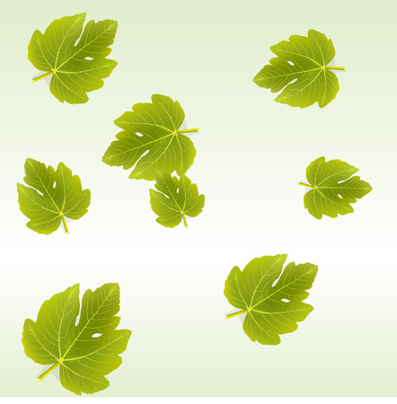 fig: background with Fig leaves