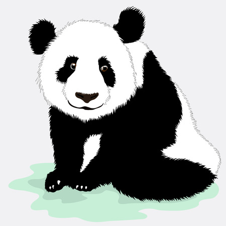 cartoons designs: Vector black and white illustration of a Cute panda Illustration