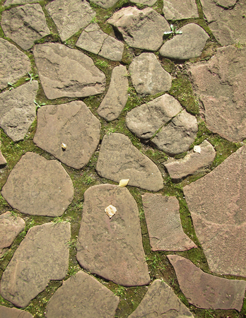 moss: Wild cobblestone pavement wild small yellow  leaves Stock Photo