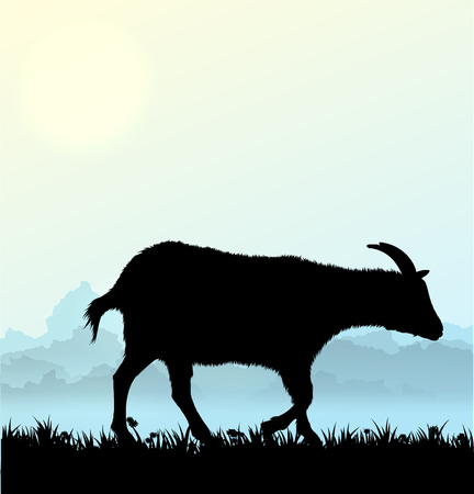 animal mouth: Silhouette of goat with grass and flowers on morning background