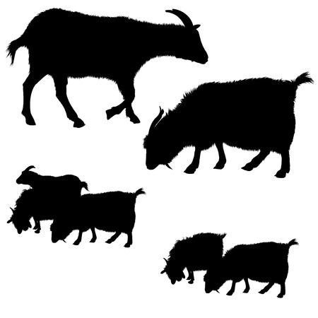 groupe: Collection of black goat silhouettes. Single and groups