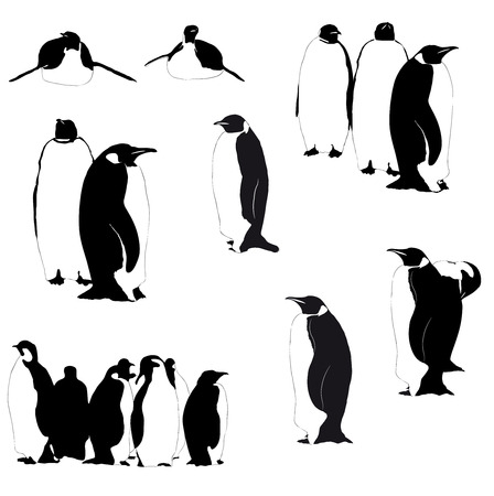 Collection of Emperor penguins silhouettes on the white