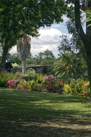 palm garden: Saint Adrien garden. South of France
