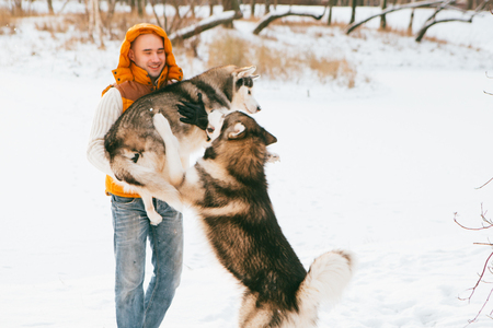 huskies: Man walking with dog winter time with snow in forest Malamute and Huskies friendship. Outdoor.