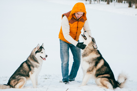 Man walking with dog winter time with snow in forest Malamute and Huskies friendship. Outdoor.