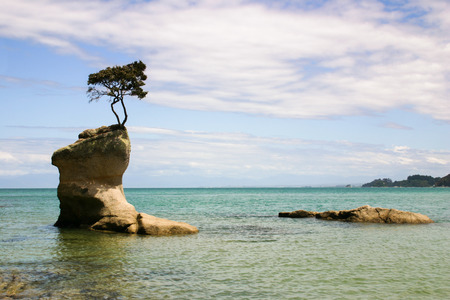 tasman: Isolated rock with a tree growing on its top, Abel Tasman Park, New Zealand Stock Photo