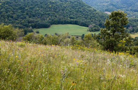 meadow  grass: Hierba de prado Winona State Park MN EE.UU.