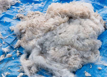 shearer: Heap of alpaca fiber Stock Photo