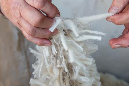 ovejas: Lana Merino en manos de una anciana