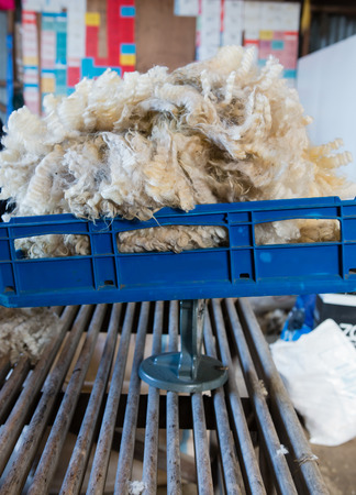 sheepskin: Pile of freshly shorn sheepskin on the scales Stock Photo