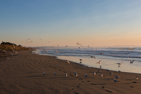 sunup: Flock of seagulls on deserted beach at sunrise Stock Photo