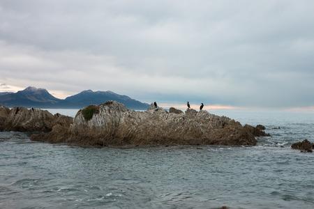 kaikoura: Birds on a rock, Kaikoura, New Zealand Stock Photo