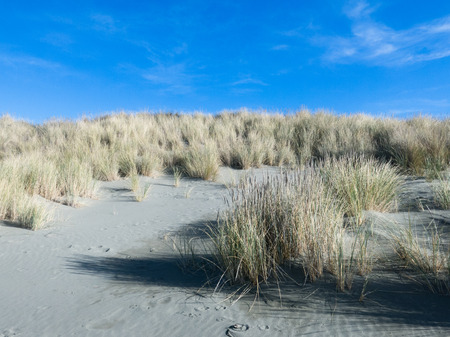 stabilization: Example of sand dune stabilization