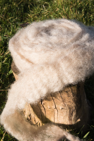 washed: Roll of washed and carded sheep wool Stock Photo