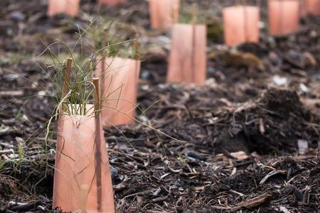 plantando arbol: Restauraci�n de Nueva Zelanda natal planta Nueva Zelanda