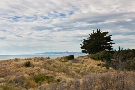 canterbury: Lone tree on ocean shore Canterbury New Zealand