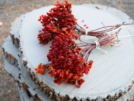 guelderrose: Two bunches of guelder-rose berries on white white painted wood