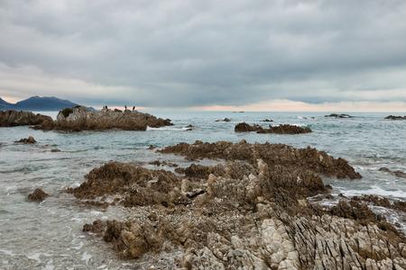 kaikoura: Birds on a rock on ocean shore, Kaikoura, New Zealand