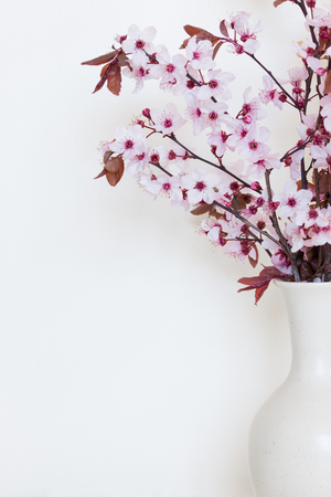 Sprigs of cherry blossoms in a white vase on white background Stock Photo