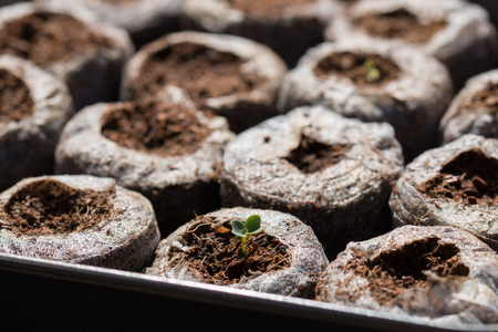 fruitful: Seedlings planted in easy grow pallets Stock Photo