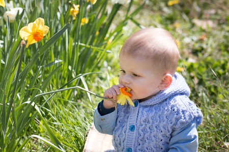 in the mouth: Adorable baby boy with daffodil flower in his hand and mouth Stock Photo