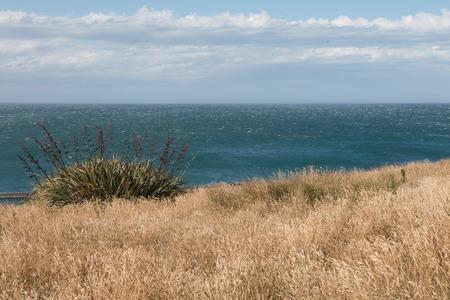new zealand flax: New Zealand flax on the ocean shore, South Island, New Zealand Stock Photo
