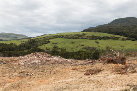 desertification: Area with felled trees at Catlins, New Zealand Stock Photo