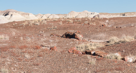shiver: Landscape of deserted land with pieces of petrified wood, Petrified Forest National Park, USA Stock Photo