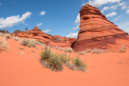 butte: Sandstone butte and plants of a desert, Vermillion Cliff, South Coyoite Buttes, USA Stock Photo