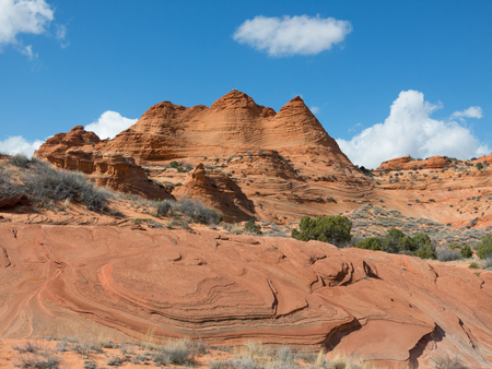 coyote: South Coyote Buttes, Utah, USA